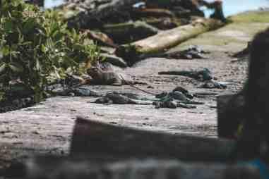 charles darwin research center puerto ayora santa cruz galapagos islands