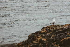 bird in new zealand