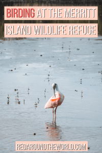 If you're in Cocoa Beach, spend a day on the Black Point Wildlife Drive in Merritt Island National Wildlife Refuge. Look for birds, alligators, and wild hogs.