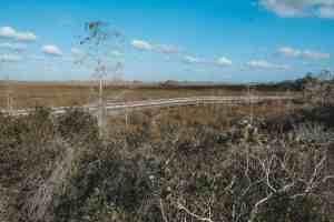 boardwalk everglades national park