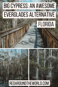 Big Cypress is an awesome Everglades alternative. Its a must-see on a South Florida road trip. Camp in Big Cypress, hike and kayak in big cypress. Big Cypress in Florida is an awesome florida road trip stop.