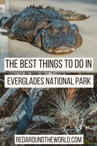 If you only have one day in Everglades National Park, you'll be able to stay busy. Hike the Anhinga Trail, do an Everglades boat tour, and look for wildlife. You'll find the best hiking trail in the everglades, the best things to do in the everglades, and all about boat tours in the everglades.