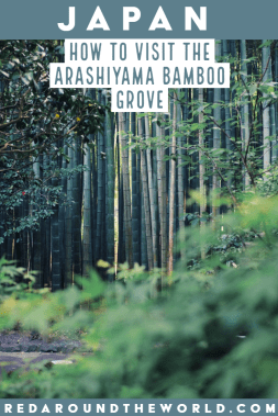 The Arashiyama Bamboo Grove is one of the best things to do if you're visiting Kyoto. The bamboo grove makes a great day trip from Kyoto any time of year. japan travel, japan vacation, japan things to do, kyoto travel, kyoto vacation, kyoto day trips, kyoto japan, kyoto things to do, kyoto japan things to do, arashiyama bamboo grove, bamboo grove japan, japan bamboo forest #japan #kyoto #bambooforest