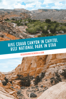 Cohab Canyon trail in Capitol Reef offers some of the best views in Capitol Reef National Park. It's a moderate and one of the best hikes in Capitol Reef. Utah travel | Utah vacation | Utah hiking | Utah things to do | Utah road trip | Utah national parks | Utah national parks road trip | Capitol Reef utah | capitol reef national park | Utah hikes | capitol reef hiking | capitol reef hikes | capitol reef things to do | capitol reef photography #roadtrip #utah #usa #capitolreef