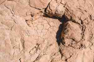 Copper ridge dinosaur tracks moab utah