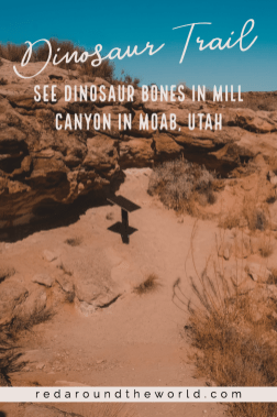The Mill Canyon Dinosaur Trail in Moab is a great place to see dinosaur bones that is easy to get to. The Mill Canyon Dinosaur Trail is near the track site. Utah national parks | Utah road trip | hiking in Utah | best things to do in Utah | Utah hikes | Utah road trip itinerary | national parks in Utah | Utah hiking | hiking in utah | moab utah | moab hikes | hiking in moab | dinosaur tracks in Utah | dinosaur bones in Utah | fossils in utah | utah things to do | utah vacation | utah travel