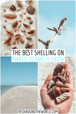Marco Island shelling is great for people of all ages. Tigertail Beach is one of the best beaches on Marco Island for shelling. Florida road trip | things to do in Florida | best Florida hikes | Florida road trip itinerary | florida beeaches | marco island florida | shelling in florida | tigetrail beach marco island | best beaches in florida | where to find shells in florida