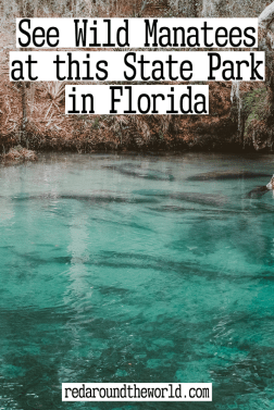 Blue Spring State Park is one of the best places to see manatees in Florida. You can see the manatees by kayak. This is the perfect day trip from Orlando. Florida road trip | florida vacation | florida things to do | Florida places to go | florida state parks | florida hikes | florida hiking | manatees in florida | florida manatees | state parks in florida | florida road trip | florida road trip ideas