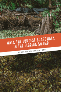 Corkscrew Swamp Sanctuary Boardwalk is one of the best day trips from Fort Meyers. It's the longest boardwalk in Florida and great for families. boardwalks in florida | boardwalks in south florida | south florida hiking | Florida road trip | Hikes in Florida | Florida hiking | best hikes in Florida | things to do in Florida | best Florida hikes | Corkscrew swamp florida | Naples florida hikes | fort meyers hikes | fort meyers day trips