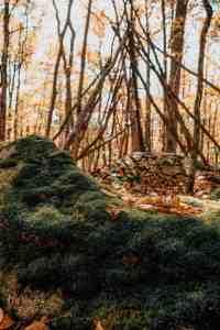 woods in north carolina