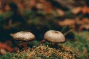 rocky fork state park tennessee mushroom