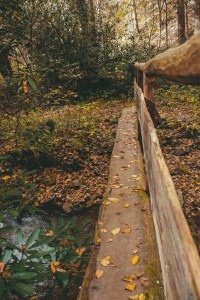 rocky fork state park tennessee in fall