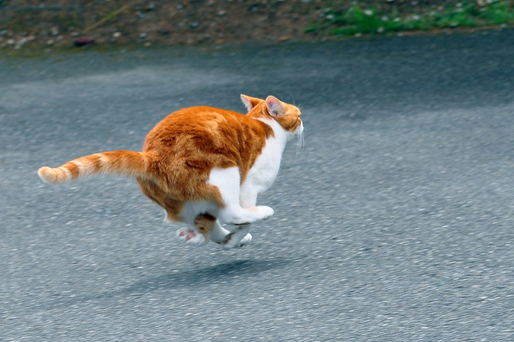 Jello in mid-air while running (Tony Cyphert/flickr.com)