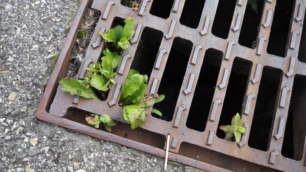 Sewer grill ecology