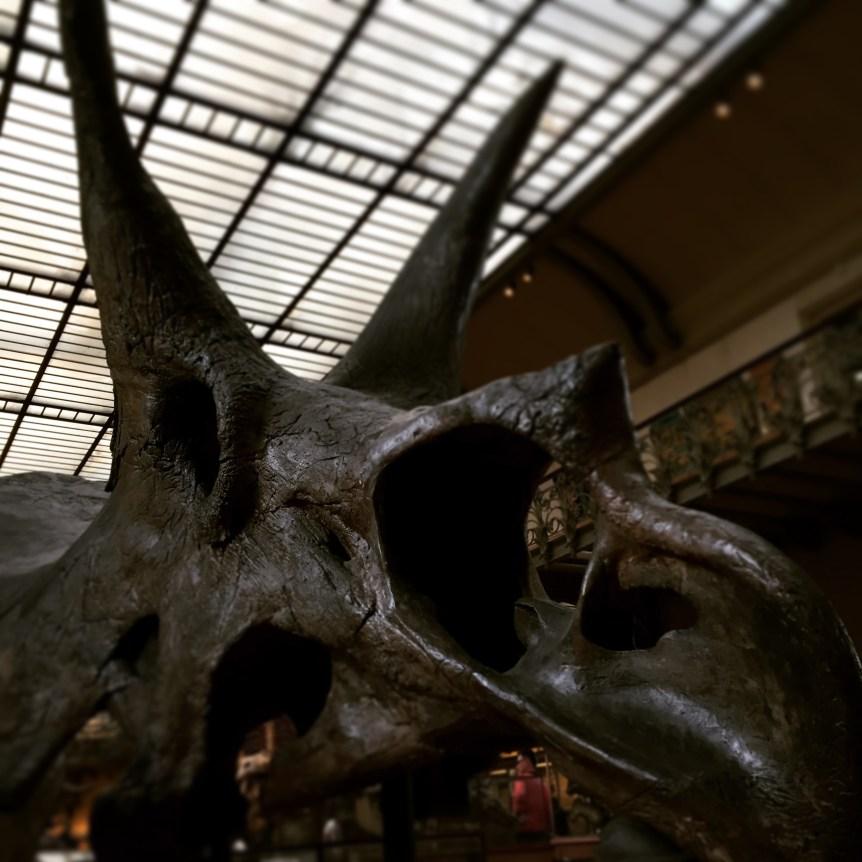 Triceratops fossil, Galerie de Paléontologie du Jardin des plantes (Paris) (personal collection)