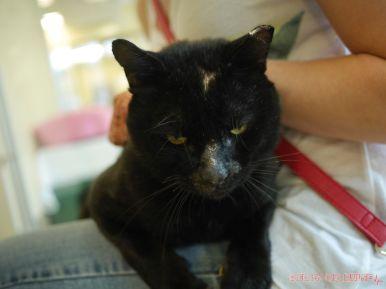 Meet Bob at the Monmouth County SPCA 8