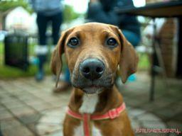 coffee-corral-pet-adoption-6
