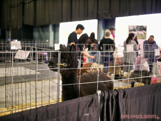 Super Pet Expo April 2018 80 of 117