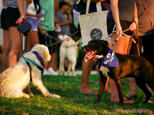 Red Bank Dog Days August 2018 10 of 51