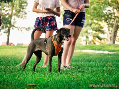 Red Bank Dog Days August 2018 36 of 51