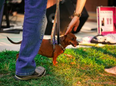 Red Bank Dog Days August 2018 5 of 51