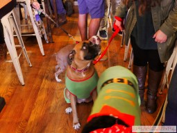 Home Free Animal Rescue with Santa Paws at Bradley Brew Project 15 of 53