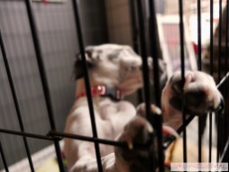 Home Free Animal Rescue with Santa Paws at Bradley Brew Project 3 of 53