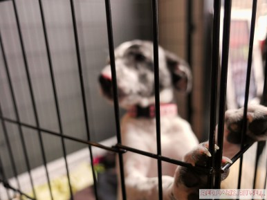 Home Free Animal Rescue with Santa Paws at Bradley Brew Project 4 of 53