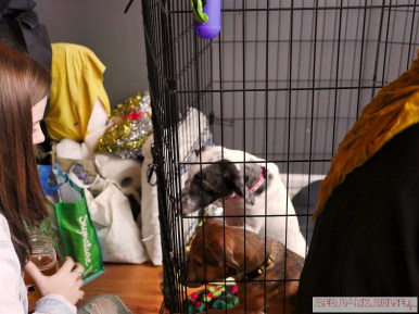Home Free Animal Rescue with Santa Paws at Bradley Brew Project 41 of 53