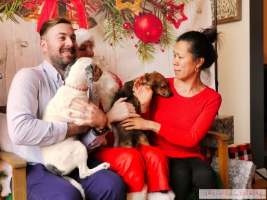 Home Free Animal Rescue with Santa Paws at Bradley Brew Project 45 of 53