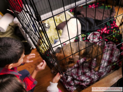 Home Free Animal Rescue with Santa Paws at Bradley Brew Project 6 of 53