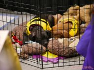 Super Pet Expo 2019 Day 2 37 of 96