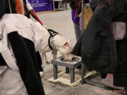 Super Pet Expo 2019 Day 2 41 of 96