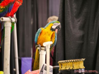 Super Pet Expo 2019 Day 2 48 of 96