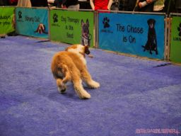 Super Pet Expo 2019 Day 2 76 of 96