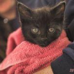 Catsbury Park Cat Convention 2019 157 of 183