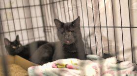 Catsbury Park Cat Convention 2019 159 of 183