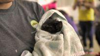 Catsbury Park Cat Convention 2019 163 of 183
