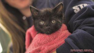 Catsbury Park Cat Convention 2019 183 of 183