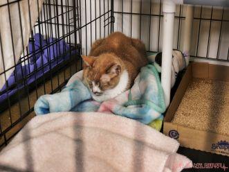Catsbury Park Cat Convention 2019 25 of 183