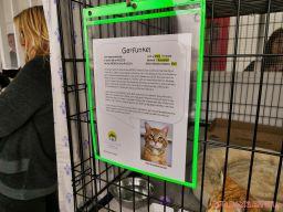 Catsbury Park Cat Convention 2019 38 of 183