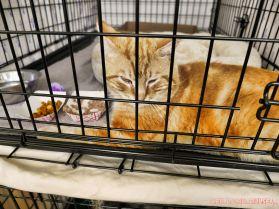 Catsbury Park Cat Convention 2019 39 of 183