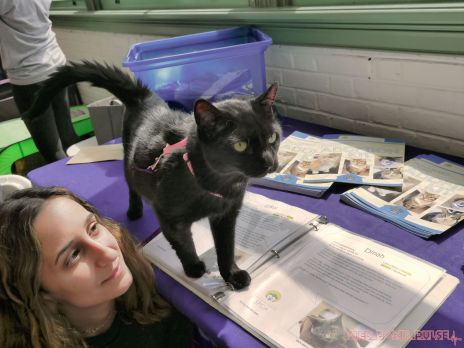 Catsbury Park Cat Convention 2019 40 of 183