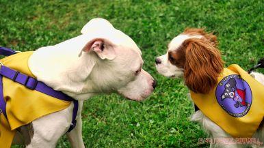 Monmouth County SPCA dog walk & pet fair 2019 27 of 95