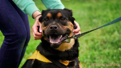 Monmouth County SPCA dog walk & pet fair 2019 32 of 95