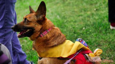 Monmouth County SPCA dog walk & pet fair 2019 34 of 95