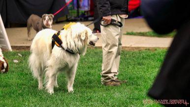 Monmouth County SPCA dog walk & pet fair 2019 35 of 95