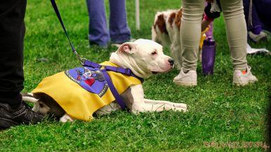 Monmouth County SPCA dog walk & pet fair 2019 50 of 95