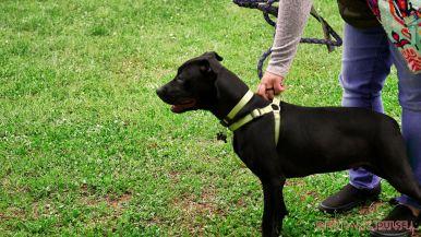 Monmouth County SPCA dog walk & pet fair 2019 52 of 95