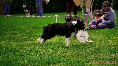 Monmouth County SPCA dog walk & pet fair 2019 54 of 95